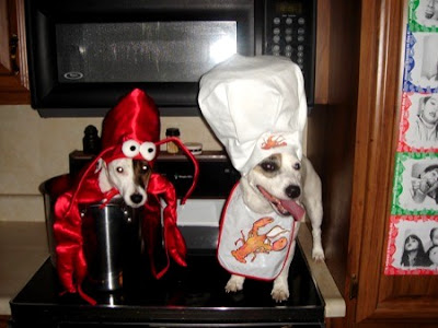 funny chef dog wallpapers pictures