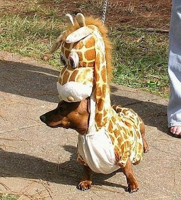 funny dog with giraffe dress pictures