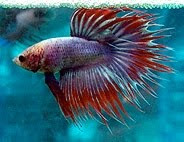 Different types of Tail Fishes photos