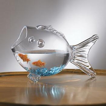 photos of gold fish model bowl aquarium