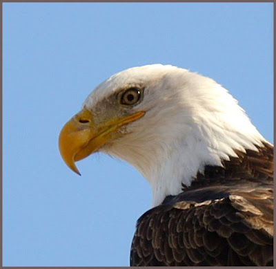 Beautiful eagle eye photo gallery