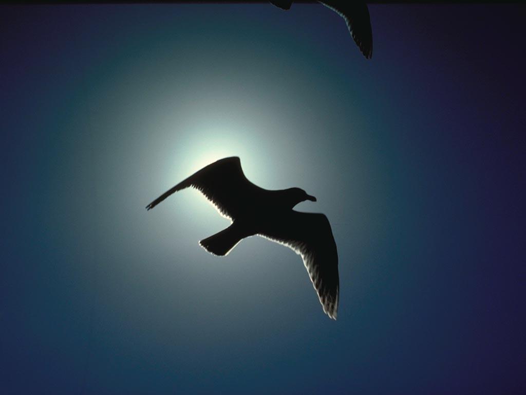 http://4.bp.blogspot.com/_d2ujvweMNFo/TDhfj01mHPI/AAAAAAAAaCo/JJ2Ee9J2OJg/s1600/Eclipse-De-Pajaro.jpg