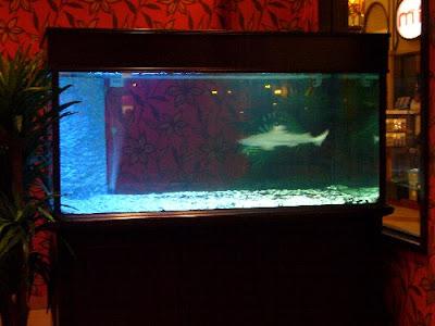 Fish Spa Again!
