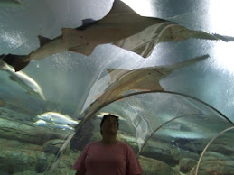 in the aquarium tube, NT wildlife park