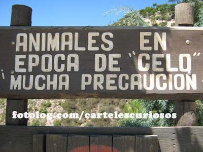 peligro animales en celo