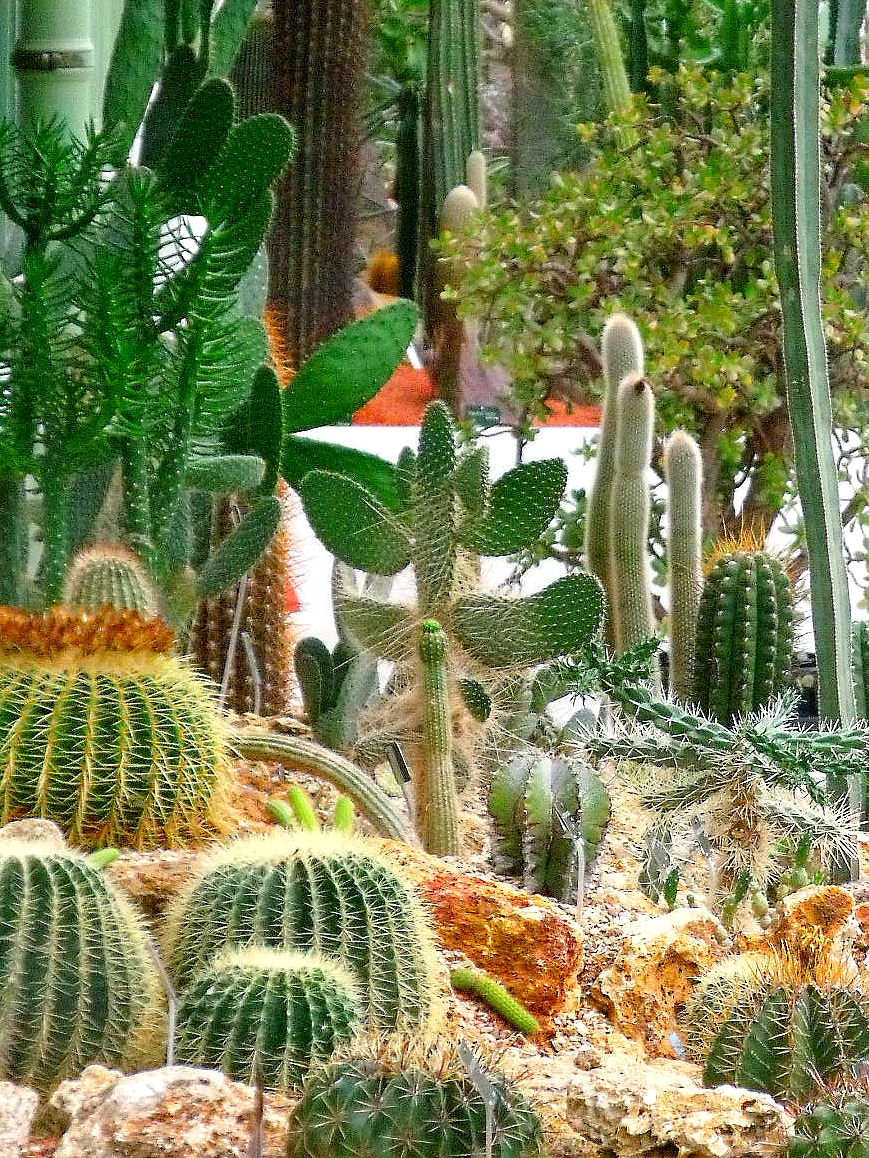 le blog de denis qu va les grandes serres du jardin des plantes. Black Bedroom Furniture Sets. Home Design Ideas