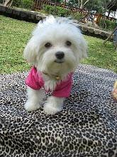 cute puppy~