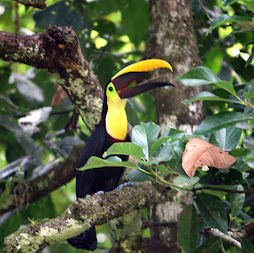 a real toucan!