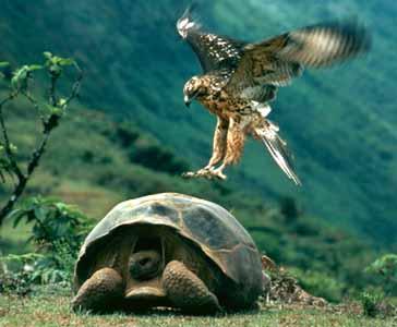 gambar binatang - foto kura kura terbesar di dunia