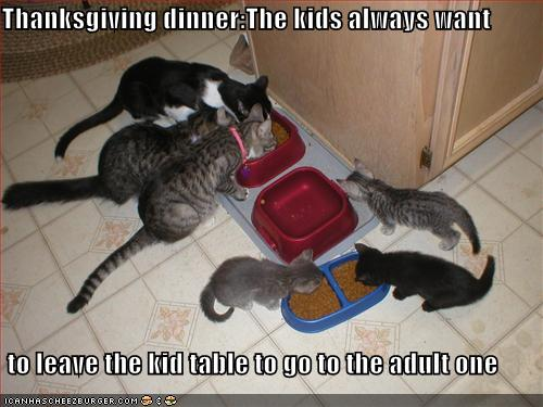 funny pictures kittens want to eat with adult cats Ashley Judd audio. Later in the interview, Ashley bungled one of the key ...