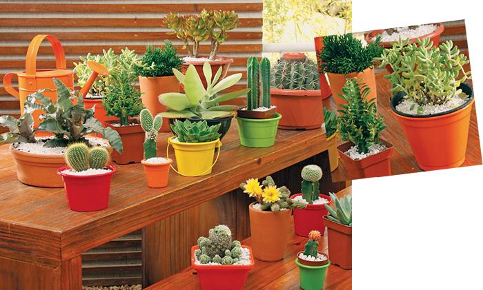 mini jardim de cactus: sobre os vasos de plantas. Como que uma estufa, o efeito surpreende