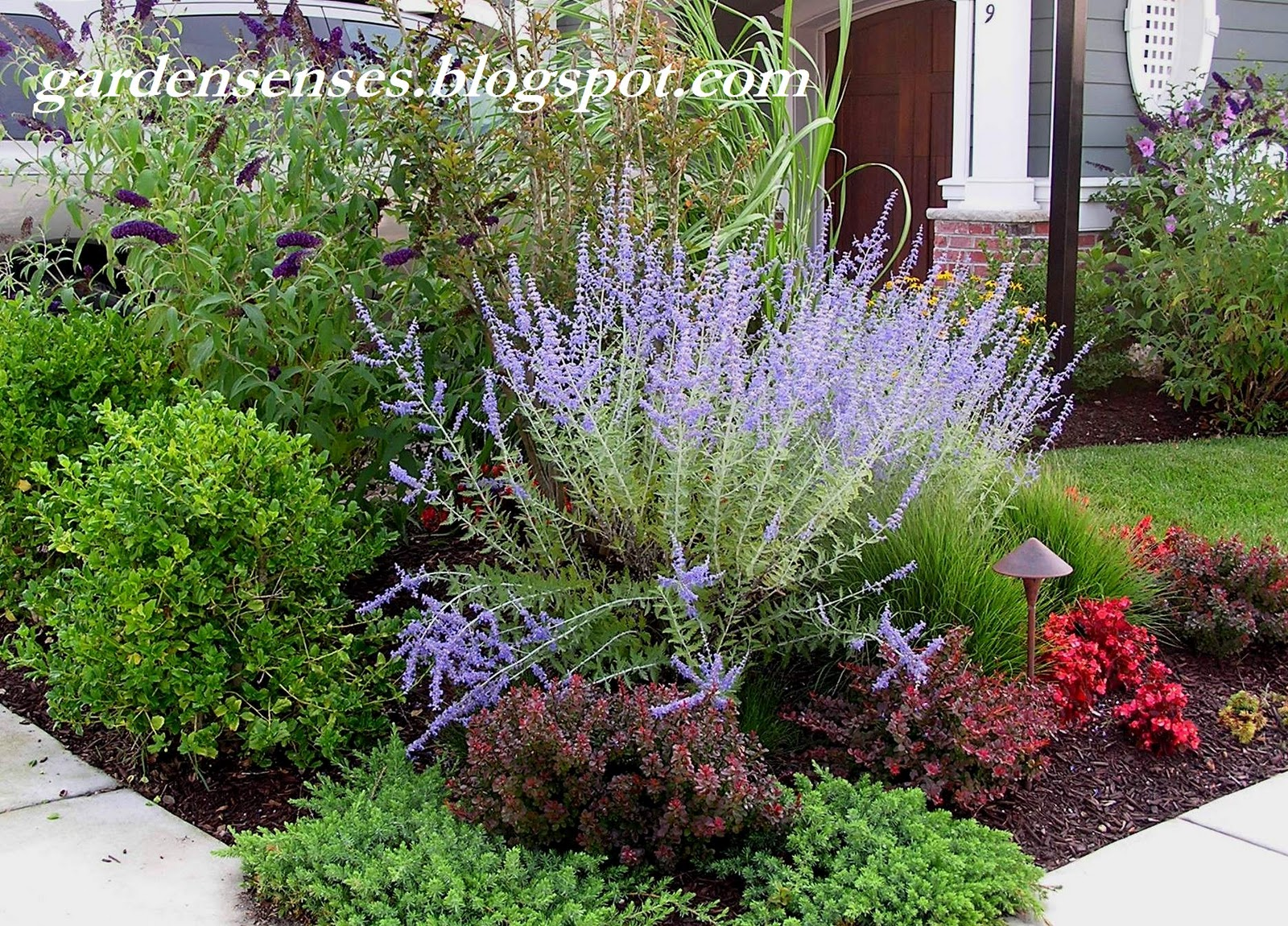 Garden sense garden design iv choosing the perfect plants for Easy care landscape design