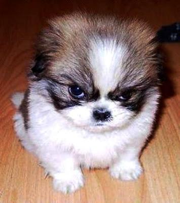 mad_puppy-11968.jpg