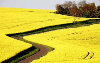 Agro-carburants : pas si écolos que ça