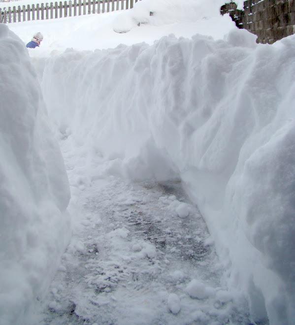 A SNOWY 2010