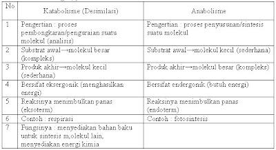 Contoh Katabolisme dan Anabolisme