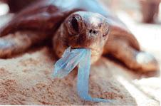 Tortugas Marinas en Problemas