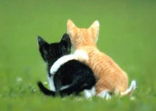 dua-kucing-berpelukan