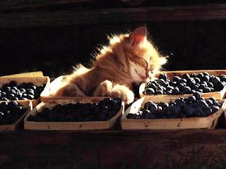 anak-kucing-tidur-dalam-bakul