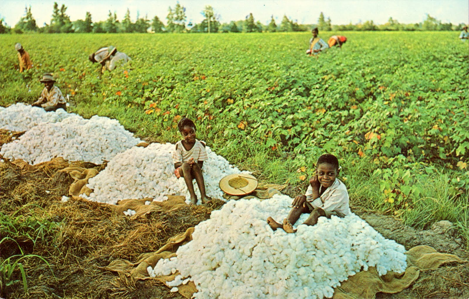 """picking cotton A remarkable drawing done in 1981 called picking cotton could have been  called """"what i don't like about my life as i look back on it"""" the artist is seen  bending."""