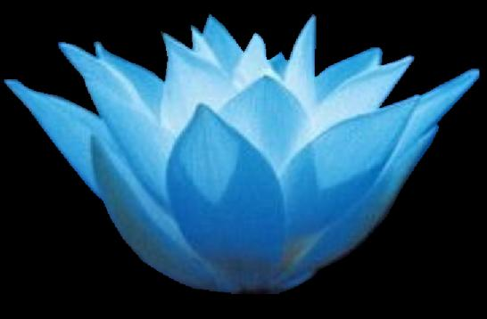 blue_lotus_black flower allie