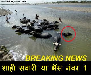 Rahul's Buffalo