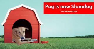 Pug is now Slumdog