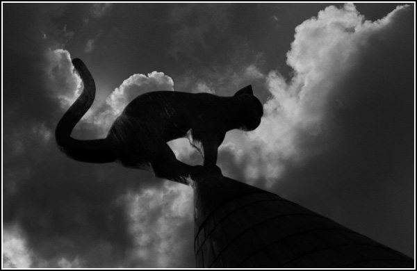 [cat-on-roof-2.jpg]