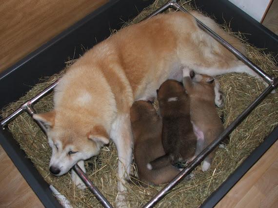 Bébés à 3 semaines