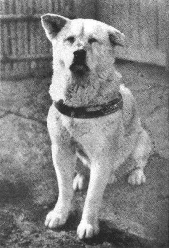 "HACHI - KO "" The Samourai Dog """