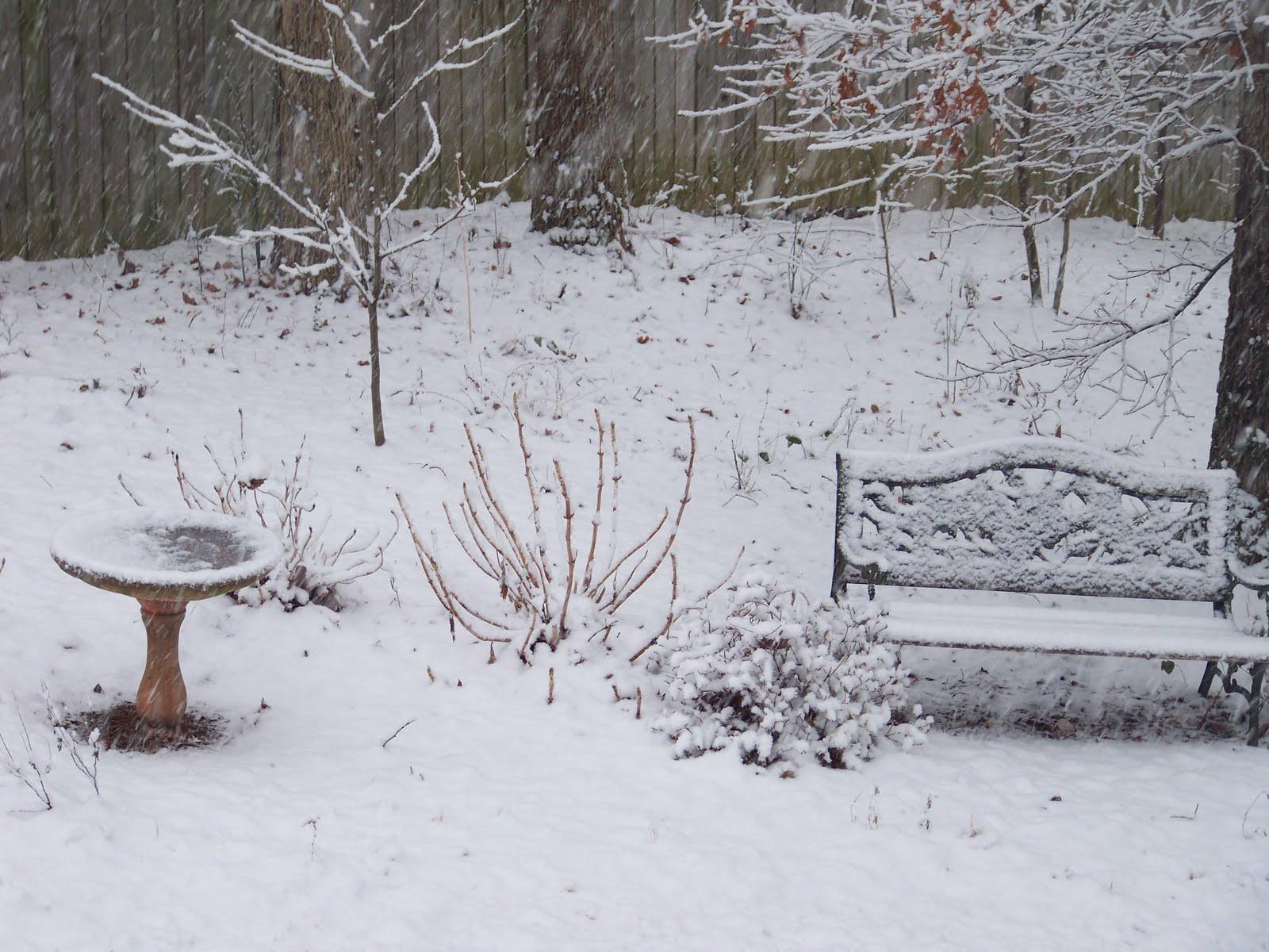 [snow+of+feb+2010+002.JPG]