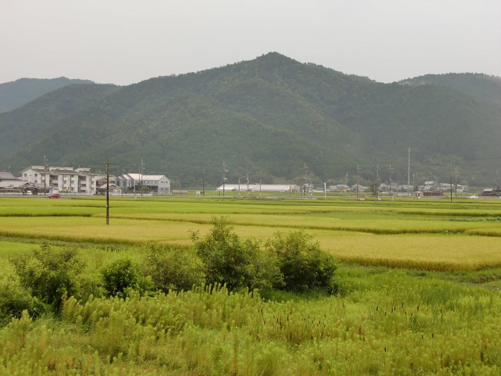 日本各地紀行: 農業 京都 skip to main | skip t...  農業 京都