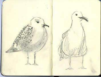 [seagull_01]
