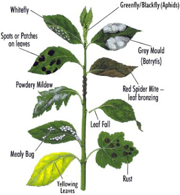 Girlshopes - House plant identification guide by picture ...