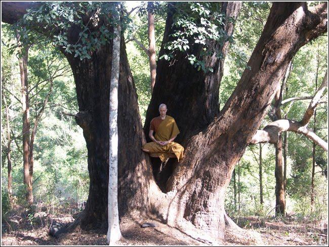 Buddha's Gentle Rain