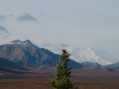 Denali!  What a place!