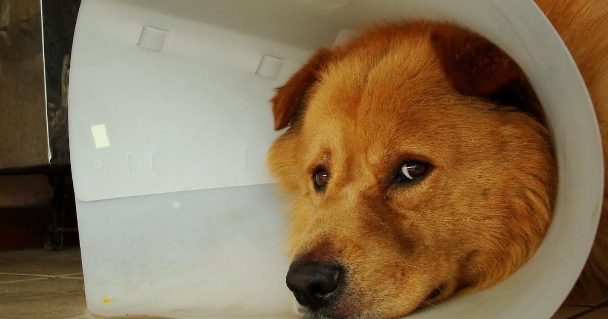 El dia a dia camilo perro callejero - Puedo banar a mi perro despues de la pipeta ...