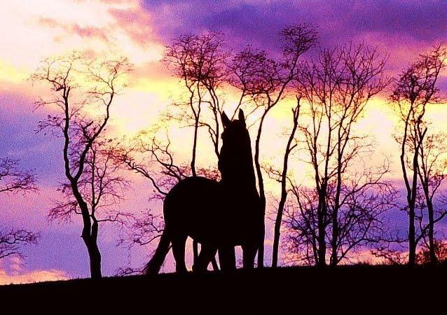 Hintergrund von Pferde bei