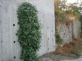 Αμπελόκηποι καστοριάς elokipi kastoria greece
