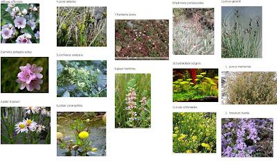 Vegetales acuaticos del guadalquivir for Plantas ornamentales wikipedia