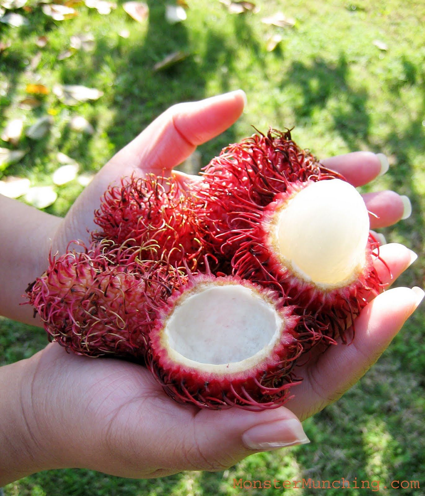 Red Fruit With Spikes http://elmomonster.blogspot.com/2009/11/rambutan-from-ba-tu-trai-cay-ngon.html