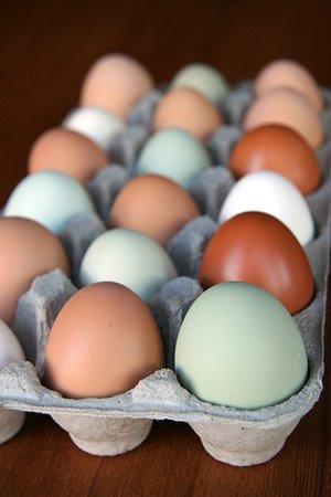 [Araucana+Eggs+-+2.jpg]