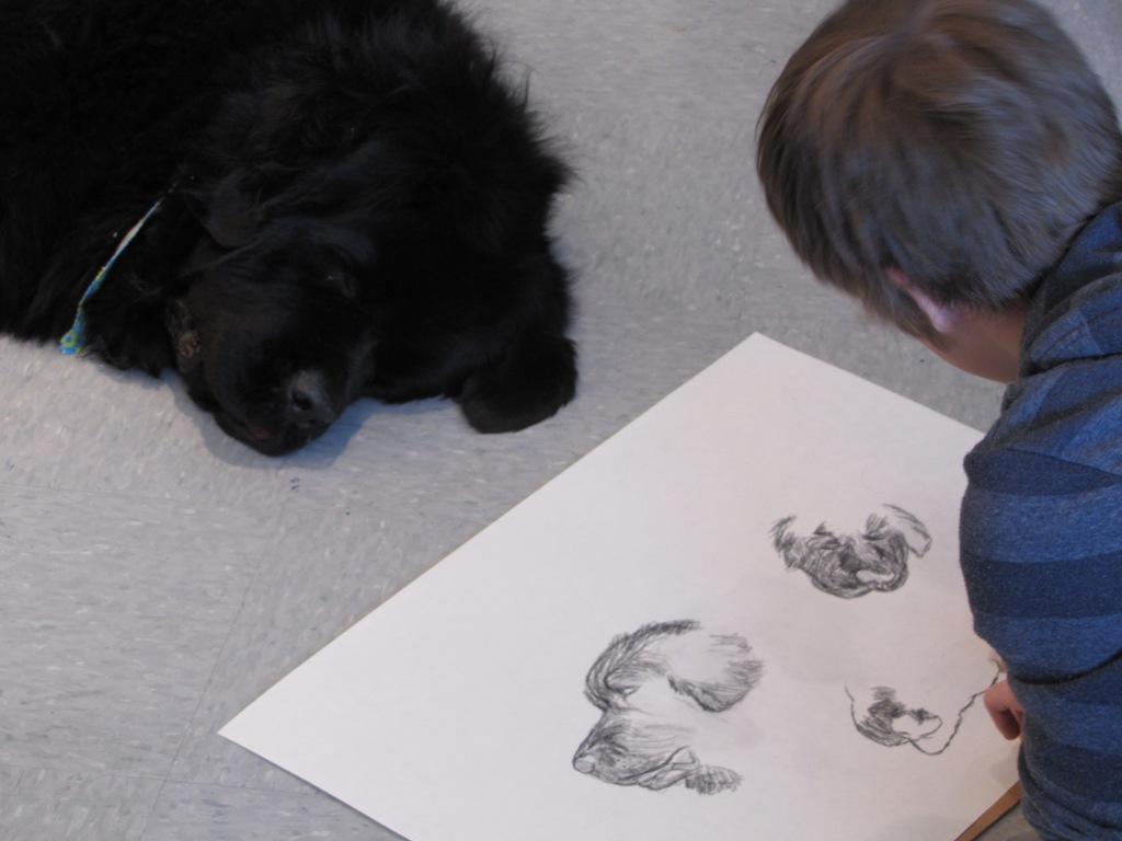 newfoundland dog drawing