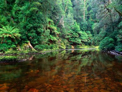 Australia an island continent for Australian rainforest