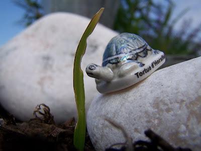 pidic encadrees photoblog photographie bordeaux tortue horsfield feve porcelaine