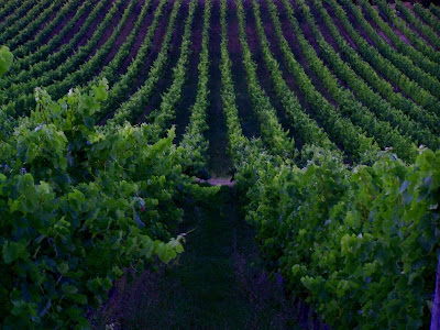 pidic encadrees photographie photoblog amateur bordeaux gironde parallelisme vignes vignoble vin entre-deux-mers