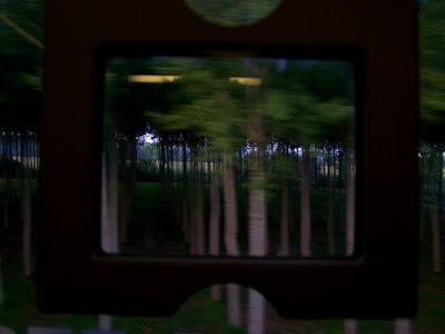 pidic encadrees bordeaux gironde train serie voyage photo photographie amateur foret alignement arbres effet stroboscopique
