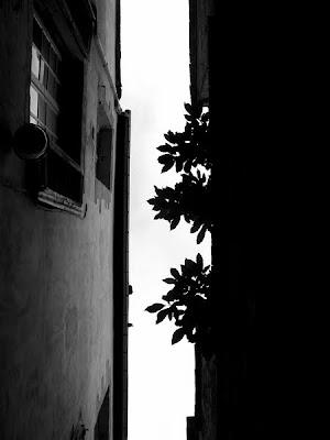 pidic encadrees photoblog leve tete rue ruelle etroite