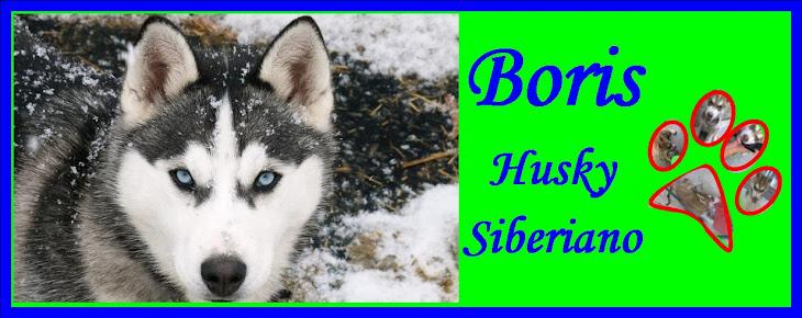 Boris Husky
