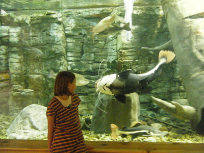 Katharine standing in front of an aquarium, which starts about knee high and goes up to the ceiling; a giant catfish, almost as large as she, is swimming straight for her head